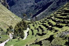 Potato terraces in Cuyo Cuyo