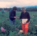 Mike Jackson and Jack Hawkes in the CIP potato germplasm collection, Huancayo, central Peru in early 1974