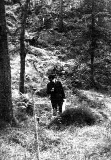 Sampling vegetation for my dissertation in 1969