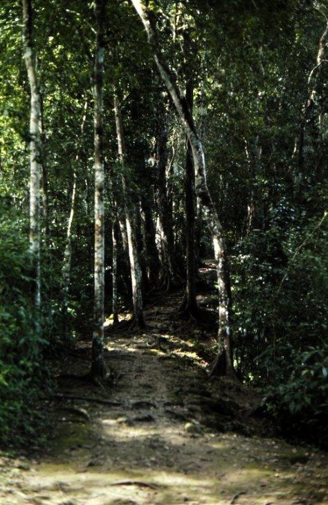 1977-07 Tikal 01
