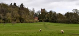 Hanbury church from the parkland
