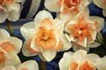 04-20130523 131 Chelsea Flower Show