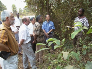 Looking at wild yams (Dioscorea spp.) on the IITA campus in Nigeria. L-R: Mike Jackson (IRRI), ??, Jan Valkoun, Willy Roca (CIP), Murthi Anishetty (FAO), Quat Ng (IITA), ??