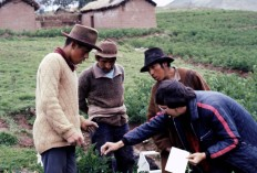 Sampling potato flower buds for chromosome studies, near Cuzco, 1974