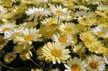 20140702 026 Wightwick Manor & Gardens