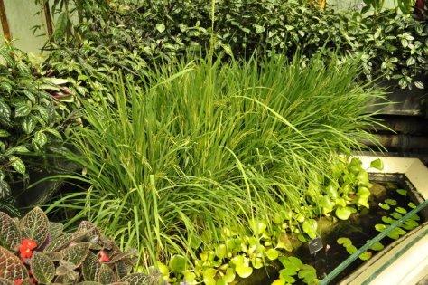 20140709164 Kew Gardens