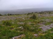 Limestone pavement 'meadow'.