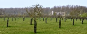 Looking to Lyveden Old Bield through the orchard
