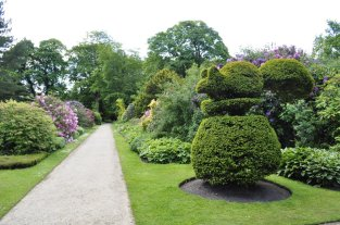 One of the two squirrel topiaries either side of the main path in the garden, looking south.