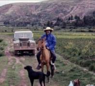 mtj on horse
