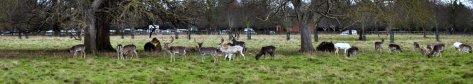 20151216 036 Charlecote Park-001