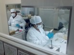 Excising tissue for in vitro culture.