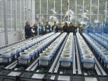 The conveyor belt system in the greenhouse.