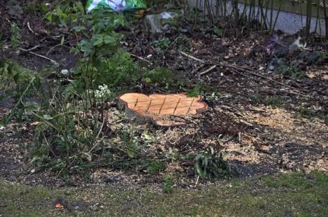 20170114-002-tree-felling