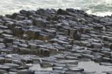20170912 059 Giant's Causeway & coast