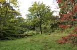 20170915 028 Rowallane Garden