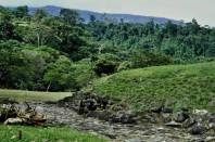 1980-01 017 Guayabo