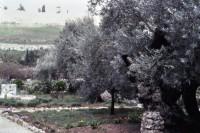 1982-03 022 Israel