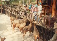 1997-02 091 Laos-IRRI