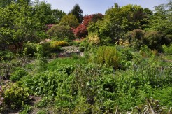 20190515 109 Emmetts Garden