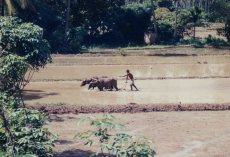 Sri Lanka 1990s 015
