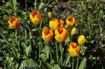 20210414 035 Alnwick Garden