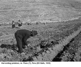 hawkes 1939 - 245