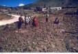 potatoes in field75