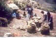 potatoes near Sorata78